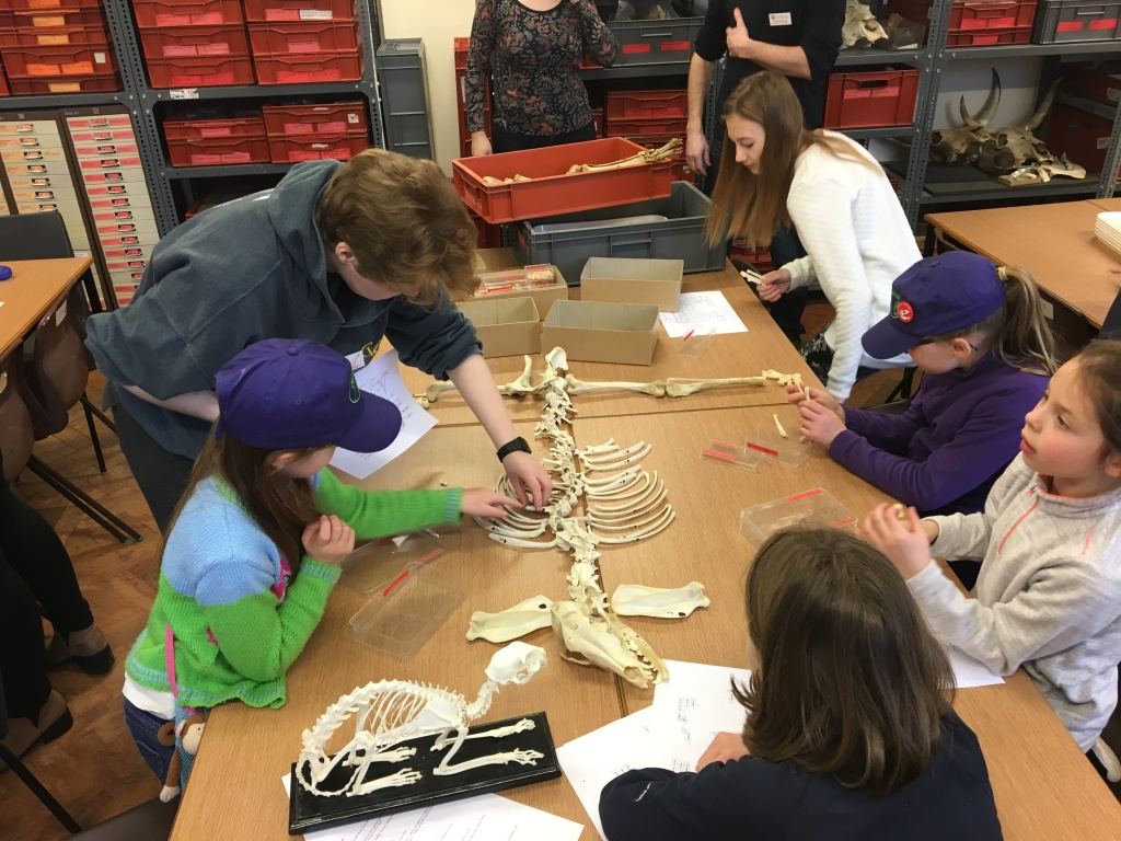 Children laying out the skeleton of an animal.